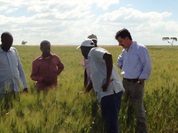 Tiberio Chiari con alcuni contadini nei campi di grano in Etiopia