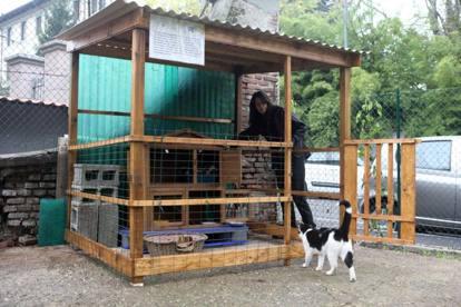 Cani e gatti nel giardino condiviso for Giardino e cani