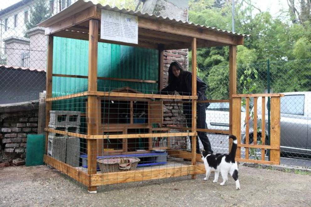 Il giardino segreto di cani e gatti for Giardino e cani