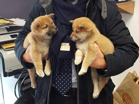 Milano, sequestrati 20 cuccioli di cane e gatto, due uomini denunciati