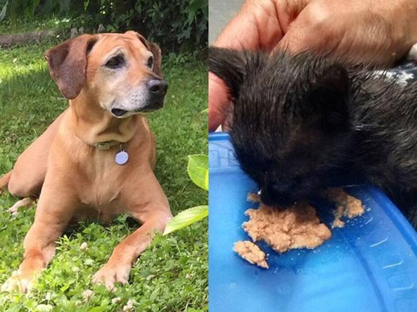 Il fiuto del cane salva il gattino imprigionato nella for Cane nella cabina dell aereo