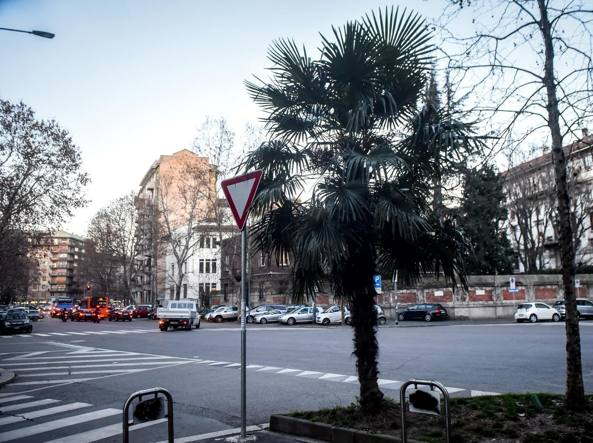 Una palma in via Canova (LaPresse)