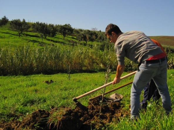 Terreni confiscati alla mafia e affidati alla cooperativa «Pio La Torre - Libera Terra»