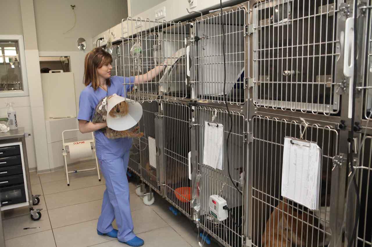 clinica veterinaria grugliasco pronto soccorso parma - photo#45