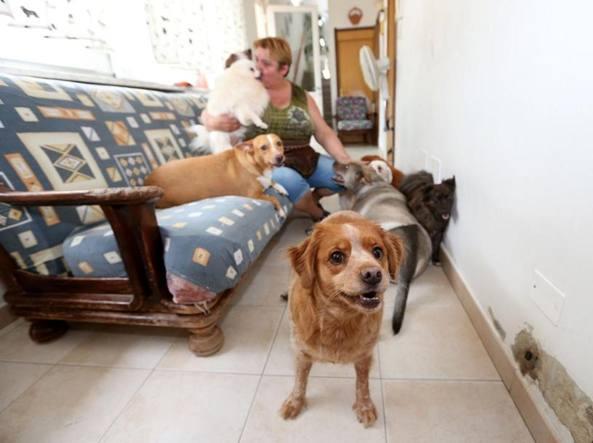 rifugio per cani abbandonati e malati la storia di enrica a milano