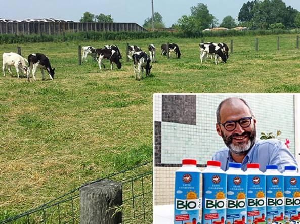 Le mucche al pascolo nell'antica Cascina Coltivi, a Zelo Buon Persico. Nel riquadro Achille Lanzarini, dg della Fondazione Sviluppo Ca' Granda, con il latte