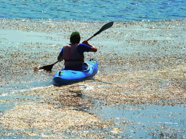 Un canoista tra le piante acquatiche che da anni infestano il lago ampio circa 850 mila metri quadrati (Fotogramma)